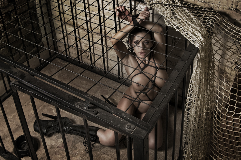 caged_cat_by_Phorus69