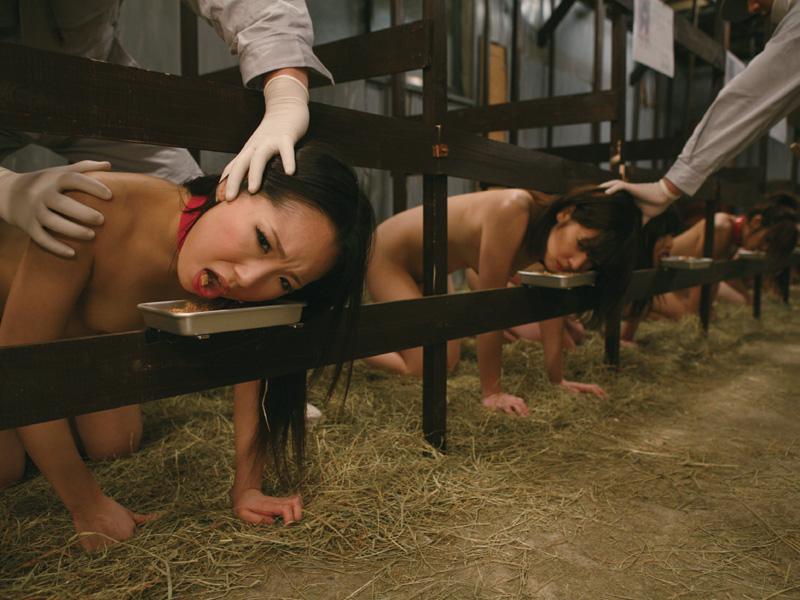 Bdsm farm